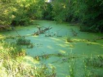 绿色池塘隔离了 免版税图库摄影