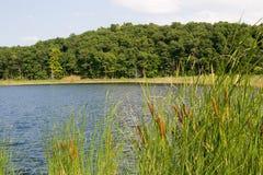 绿色池塘 免版税图库摄影