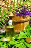 绿色油料植物健康 库存照片