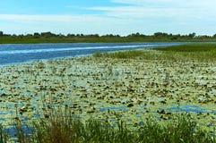 绿色沼泽原野、沼泽地有灌木的,树和地衣 库存照片