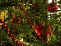 绿色浅绿色的针在一棵真正的圣诞树增长 免版税库存图片