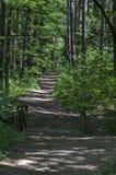绿色混合具球果和落叶林Ðœagnetic风景有可爱的道路的在Vitosha山 免版税库存照片