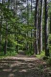 绿色混合具球果和落叶林Ðœagnetic风景有可爱的道路的在Vitosha山 库存照片