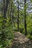 绿色混合具球果和落叶林Ðœagnetic风景有可爱的道路的在Vitosha山 库存图片