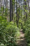 绿色混合具球果和落叶林Ðœagnetic风景有可爱的道路的在Vitosha山 免版税图库摄影