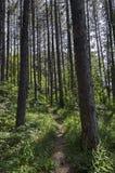绿色混合具球果和落叶林Ðœagnetic风景有可爱的道路的在Vitosha山 图库摄影