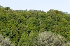 绿色混杂的春天森林 库存图片