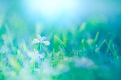 绿色激动人心的草和叶子在阳光下 免版税库存图片