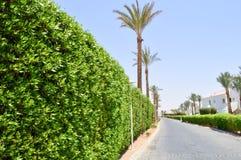 绿色灌木、植物有叶子的在一种热带手段与棕榈树和一个白色大厦美丽的活篱芭与屋顶  免版税库存图片