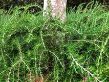 绿色灌木在树附近增长在公园在城市 里雄莱锡安,以色列 库存照片