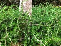 绿色灌木在树附近增长在公园在城市 里雄莱锡安,以色列 免版税库存图片