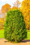 绿色灌木 库存图片