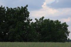 绿色灌木 免版税库存照片