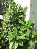 绿色灌木 向量例证