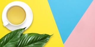 绿色热带叶子和茶杯平的被放置的书写工作有拷贝空间的,在淡色蓝色桃红色背景 r ?? 免版税库存图片