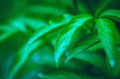 绿色热带叶子背景的照片  免版税库存图片