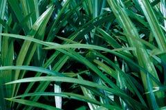 绿色热带叶子,叶子背景,自然概念 图库摄影