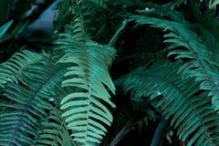 绿色热带叶子,叶子背景,自然概念 免版税库存图片