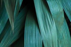 绿色热带叶子,叶子背景,自然概念 库存照片