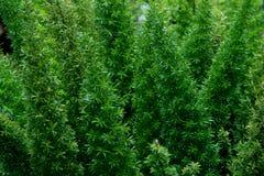 绿色热带叶子,叶子背景,自然概念 免版税库存照片
