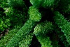 绿色热带叶子,叶子背景,自然概念 库存图片
