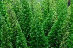 绿色热带叶子,叶子背景,自然概念 免版税图库摄影