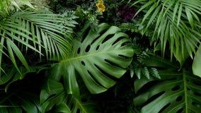 绿色热带叶子Monstera,棕榈、蕨和园林植物背景 库存照片