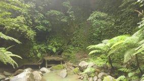 绿色热带流动在岩石寄生虫视图的森林和岩石河 在雨林和老台阶的河小河 通配 股票录像
