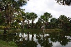 绿色热带 免版税图库摄影