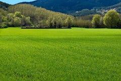 绿色爆发春天 免版税库存图片