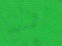 绿色爬行动物皮肤 免版税图库摄影