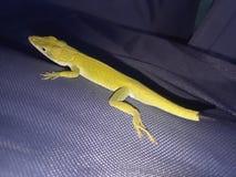 绿色爬行动物蜥蜴 库存图片