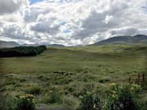 绿色牧场地和辗压小山在S的苏格兰高地 库存图片