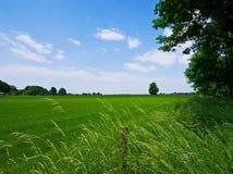 绿色牧场地 库存照片