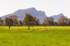 绿色牧场地- Dunkeld 免版税图库摄影
