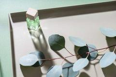 绿色玉树分支和玻璃瓶子 库存照片