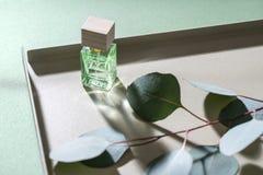 绿色玉树分支和玻璃瓶子 图库摄影