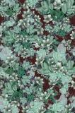 绿色玫瑰 图库摄影