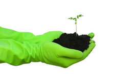 绿色现有量种植whith年轻人 免版税库存图片