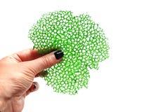 绿色珊瑚绉纱鞋带食物装饰在手中 图库摄影