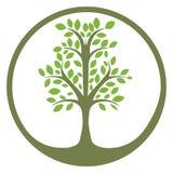 绿色生物演化谱系图解在圈子的 皇族释放例证