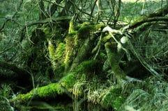 绿色生苔树桩 免版税库存照片