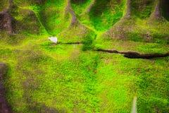 绿色生苔背景盖子粗砺的石头在热带fo 库存图片