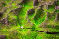绿色生苔背景盖子粗砺的石头在热带fo 免版税图库摄影