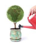 绿色生长一点拥有您的行星 库存图片