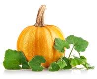 绿色留下南瓜蔬菜黄色 免版税库存照片