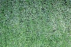 绿色留下墙壁纹理或背景 库存图片