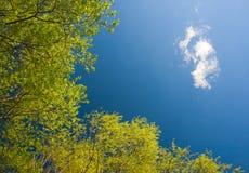 绿色留下天空 免版税库存照片