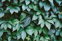 绿色留下模式 背景蓝色云彩调遣草绿色本质天空空白小束 免版税图库摄影