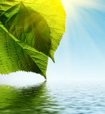 绿色留下水 免版税库存照片
